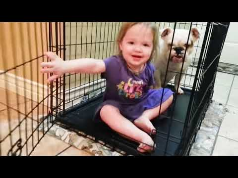 Cute Dogs and Babies are Best Friends - Dogs Babysitting Babies Video