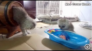 All Kittens Catch Each Other Outside Cage !