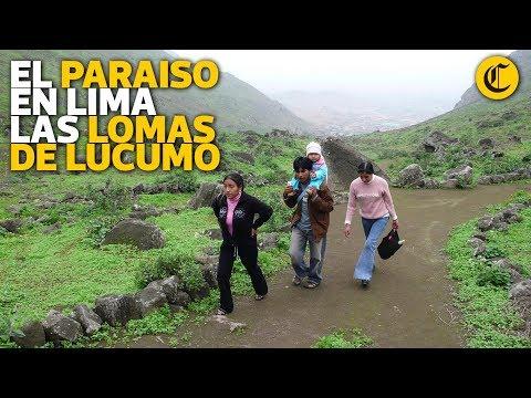 Conozca el paraiso en Lima:  las lomas de Lucumo - UCLtGUPjKLqa3zgdmhKCZONg