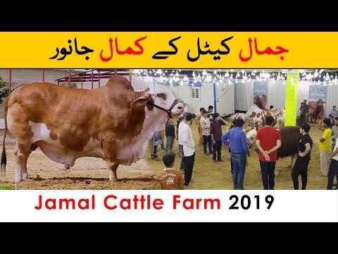 Jamal Cattle Farm 2019 - Sohrab Goth Maweshi Mandi Karachi