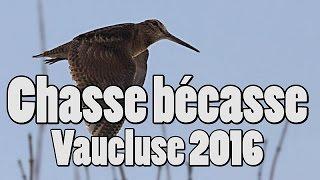Chasse bécasse Vaucluse 2016