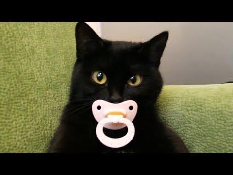 Funny Cats - Funny Cute Kittens Video Vines 2017 - UCSFRMhhEMke7JqhNLBb51qw