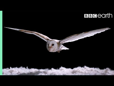 Experiment! How Does An Owl Fly So Silently? | Super Powered Owls | BBC - UCwmZiChSryoWQCZMIQezgTg