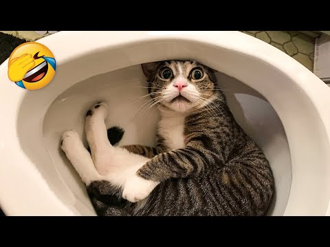 The Best Funny Videos Of Cats And Dogs 🐶😹 - Funny Animals Compilation 😂 - UC4idzq764RTms8P1zgdo7mw