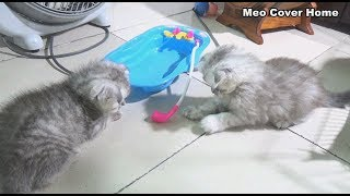 My Kittens So Crazy In Outside Cage | kittens funny | Meo Cover Home
