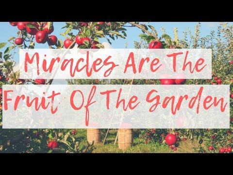Garden Variety Christianity  Garden Story ~ Ep  2