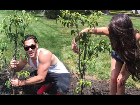 VLOG: Planting Our First Tree! Carli Bybel & BrettCap - UC21yq4sq8uxTcfgIxxyE9VQ