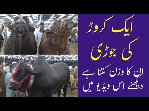 Ek Crore Ki Jodi | Sindh Cattle Farm | Sohrab Goth Mandi 2021