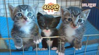 우린 고양이인데 우리 엄마는 개에요. dog요. ㅣ Kittens' Mom Is A BedlingtonTerrier..?!