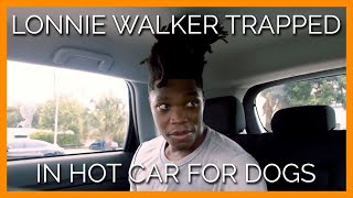 NBA Star Lonnie Walker Risks It All for Dogs Trapped in Hot Cars