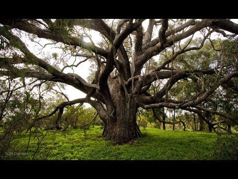 Bí ẩn cây cối có thể nói chuyện được như người