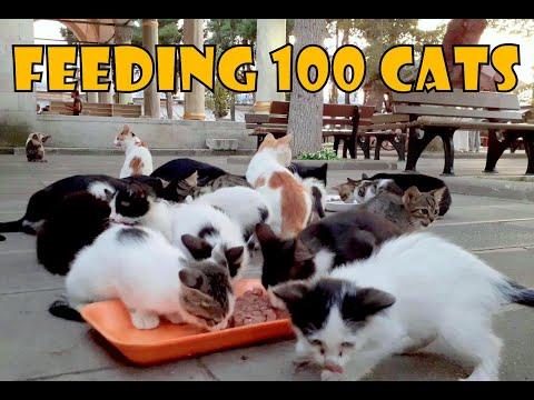 Feeding 100 Stray Cats 2 - Turkey's Cat Island (Cute Cats - Cute Kittens) - UCz_cPU8mjoveseNrasZ91rg