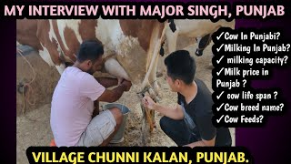 Milking In Punjab || Extraction of milk from cow in Chandigarh || HF Cow hand milking in Punjab