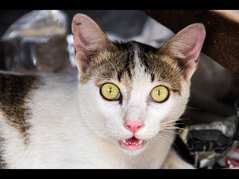 angry cats compilation 2019 - the compilation of angry and scary cats