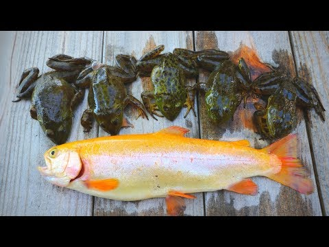Catch n' Cook Fried Bullfrogs & GOLDEN Trout!