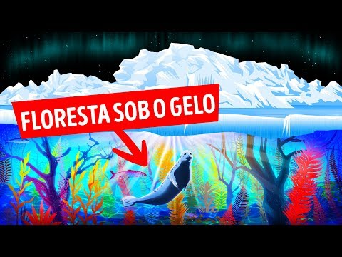 Novas Florestas Sob O Gelo Do Ártico Continuam CrescendoNovas Florestas Sob O Gelo Do Ártico Conti