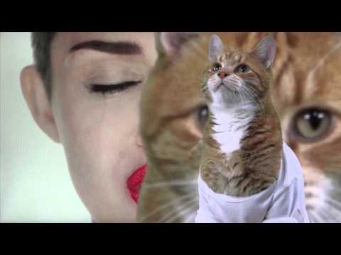 Play Miley Cyrus Off, Keyboard Cat!