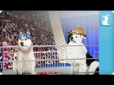 Pet vs Pet Rap Battle Tournament Round 2 / Husky vs. Border Collie - UCPIvT-zcQl2H0vabdXJGcpg