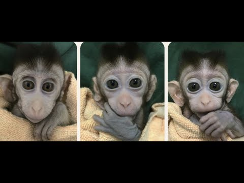 Breaking News: 5 Mutant Monkeys CRSIPR CLONES Scary DNA