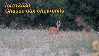 Week-end de rêve dans l'Hérault! Chasse aux brocards et renard
