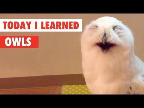 Today I Learned   Owls Facts - UCPIvT-zcQl2H0vabdXJGcpg