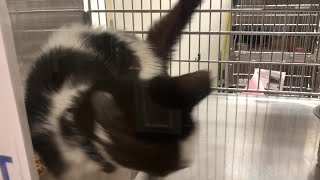Kitten excited for Clear the Shelters