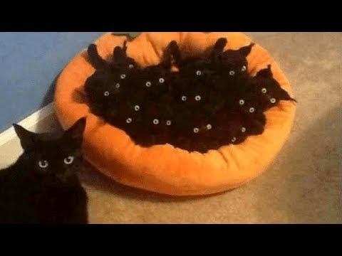 CATS are on Earth to MAKE US LAUGH - Super FUNNY CAT VIDEOS compilation - UCR2KG2dK1tAkwZZjm7rAiSg