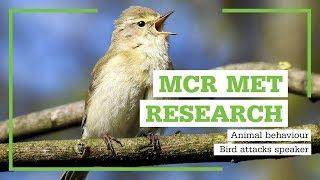 #McrMetResearch: Bird Attacks Speaker
