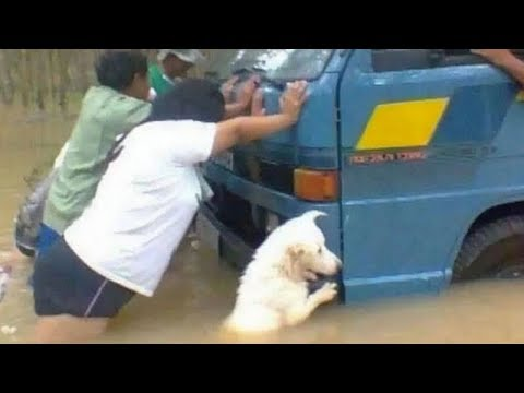 UNBELIEVABLE and UNEXPECTED MOMENTS with FUNNY ANIMALS! - UCR2KG2dK1tAkwZZjm7rAiSg