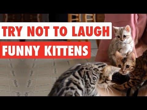Try Not To Laugh | Funny Kittens Video Compilation 2017 - UCPIvT-zcQl2H0vabdXJGcpg