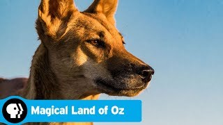 Official Preview | Magical Land of Oz | PBS
