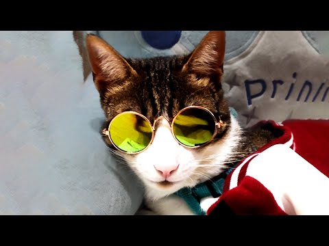 THE BEST CUTE AND FUNNY CAT VIDEOS OF 2020! 🐱 - UCzn2gx8zzhF0A4Utk8TEDNQ