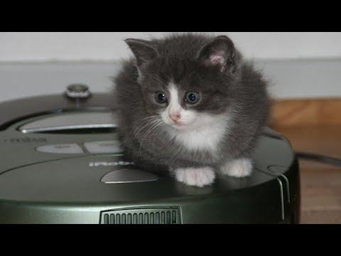 Cats & Dogs driving on Roomba - Funny cat & dog compilation - UC6OLQi0Gi3S6QVxWnBMCB6Q