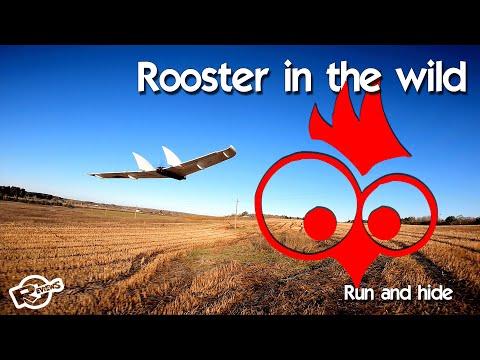 Carbon Wing - rooster in the wild - UCv2D074JIyQEXdjK17SmREQ