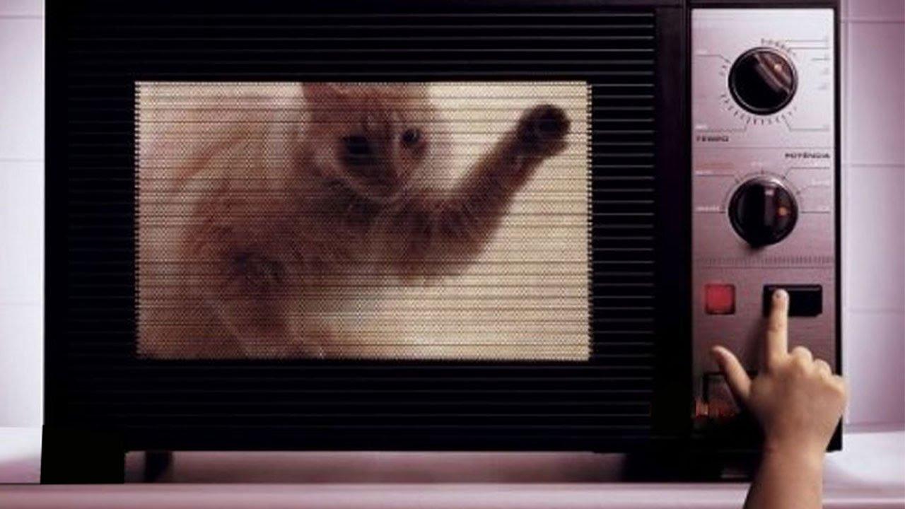 Часов гифка, микроволновка смешные картинки