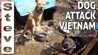 ATTACKED BY RABID DOG IN SAPA VIETNAM 🇻🇳