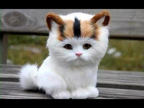 Video lucu Kucing bikin ngakak abis, kucing ngambek, kucing mengeong 2019