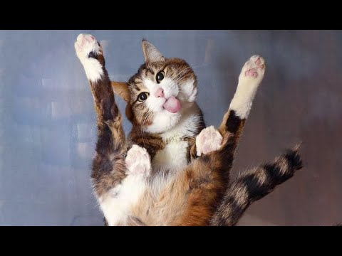 Funniest Cats 😹 - Don't try to hold back Laughter 😂 - Funny Cats Life - UCYPrd7A27nLhQONcCIfFTaA