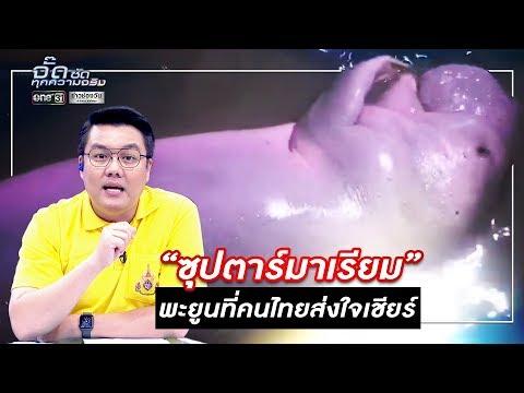 ซุปตาร์มาเรียม พะยูนที่คนไทยส่งใจเชียร์ | จั๊ด ซัดทุกความจริง | ข่าวช่องวัน | one31