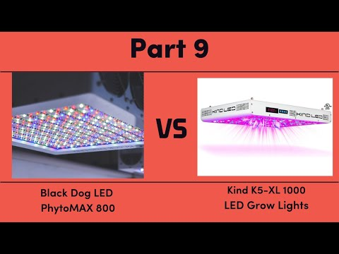 Black Dog LED PhytoMAX 800 vs. Kind K5-XL1000 LED Grow Lights - Part 9