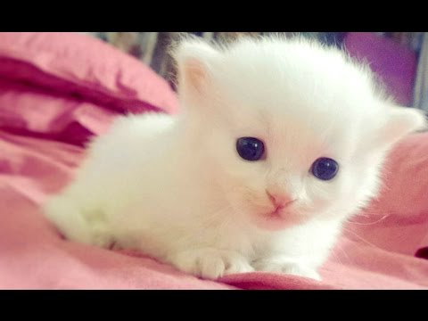 Baby Animals - A Cute Animal Videos Compilation 2016 - UCZSUvJTxnp7ay48TUJAf4RQ