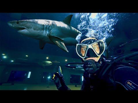 Ночь в Аквариуме с Акулами и Пираньями. День Волонтера
