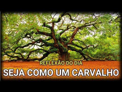Mensagem de Bom Dia/Seja Como Um Carvalho(Reflexão)