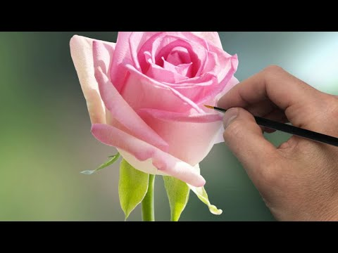Painting a Rose   Episode 203