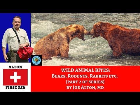 Animal Bites: Bears, Rats, Raccoons, Rabbits & More (Part 2 of series)