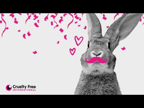 Forever Against Animal Testing: what's next? How to have animal testing in cosmetics abolished