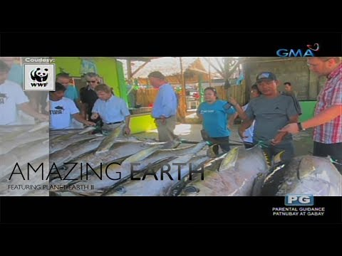 Amazing Earth: Philippine's Tuna production