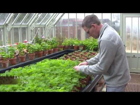 The Head Gardeners' Tale