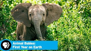 Official Preview | Animal Babies: First Year on Earth