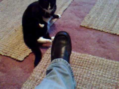 Osobliwe kocie zachowanie
